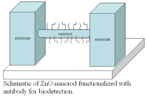 Schematic of ZnO nanorod functionalized with antibody for biodetection